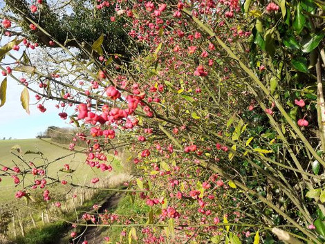 Spindle on the Monarchs Way