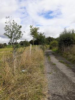 Gradidge Lane spindle trees