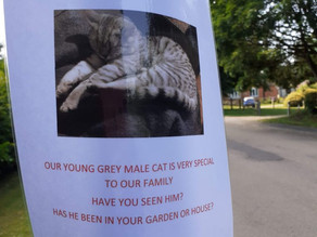 A Stratford family's cat is missing