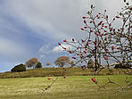 Old Sarum + rosehips Oct 2020.jpg