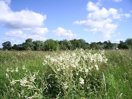 Willow and Meadowsweet (1).jpg