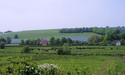 Linseed Avon Farm May 2020 (1).jpg
