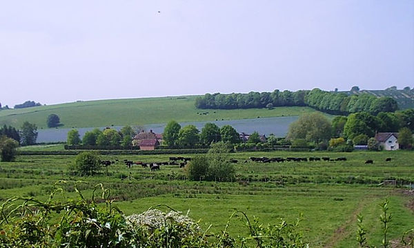 LInseed Avon Farm May 2020 (1).jpg