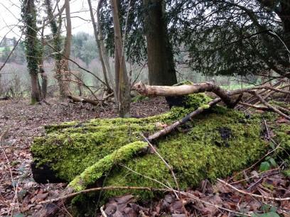 attractive green moss