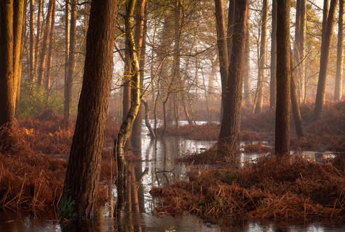 Woodland Heaven