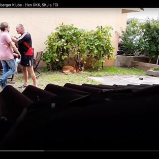 Násilie a vyhrážanie v Slovenskom Leonberger Klube. Prečo ÚKK nezakročí?