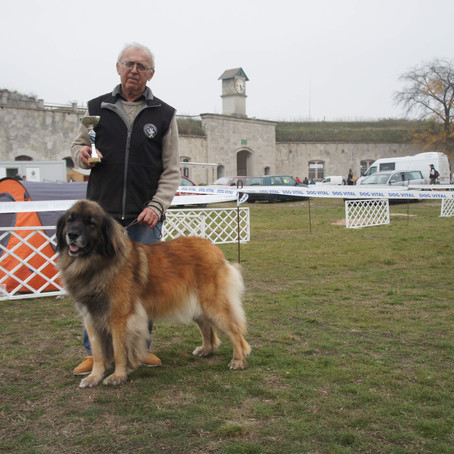 Hungarian Leonberger Club Show Komarom & International Dog Shows 2017
