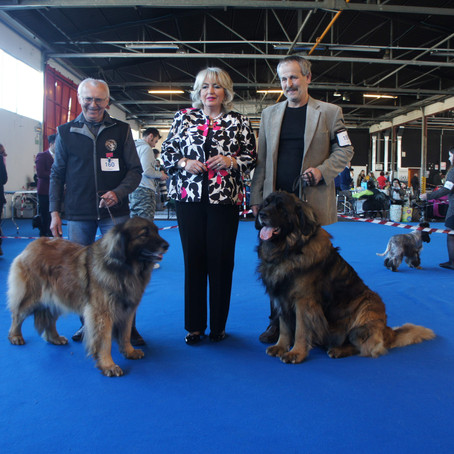 Leonberger Dog Shows San Marino 10. - 12. 03. 2017