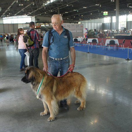 International Dog Show - Brno, CZECH REPUBLIC - 28. 06. 2015