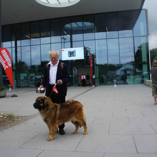 European Dog Show 2019