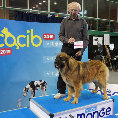 Dog Show SLOVENIA 10th November 2019