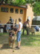 National Dog Show Senec, SLOVAKIA - 03.