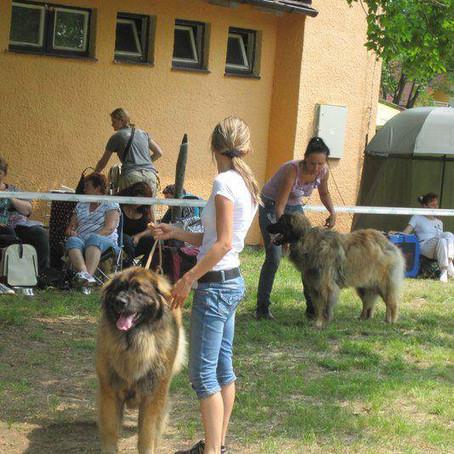 National Dog Show Senec, SLOVAKIA - 03. 06. 2011