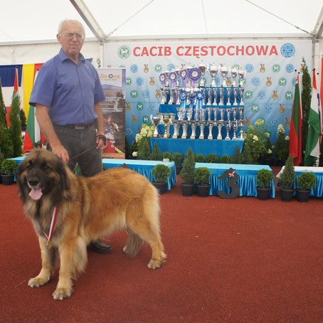 International Dog Show Czestochowa, POLAND - 26. 07. 2015