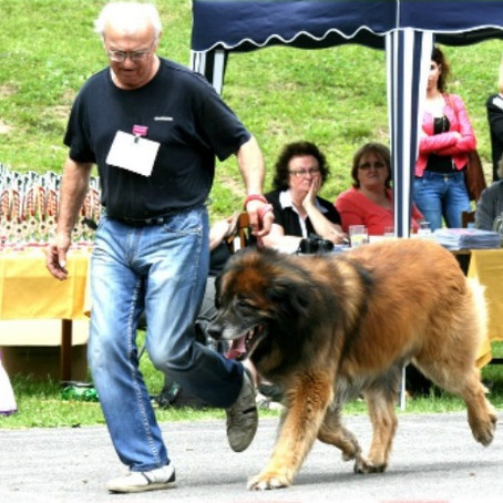 Slovak Leonberger Club Dog Show Tajov 04. 06. 2016