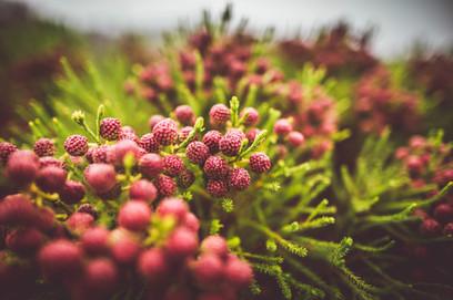 Fynbos_Jan_2021__HighRes-1151.jpg