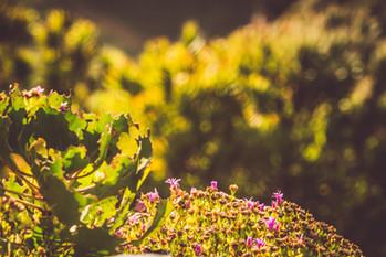 Fynbos_Jan_2021__HighRes-1107.jpg