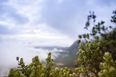Fynbos_Jan_2021-0933.jpg