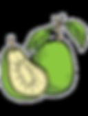 Guava-fruit.png