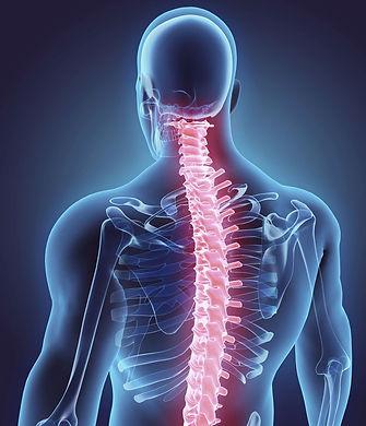 spine-800x932.jpg