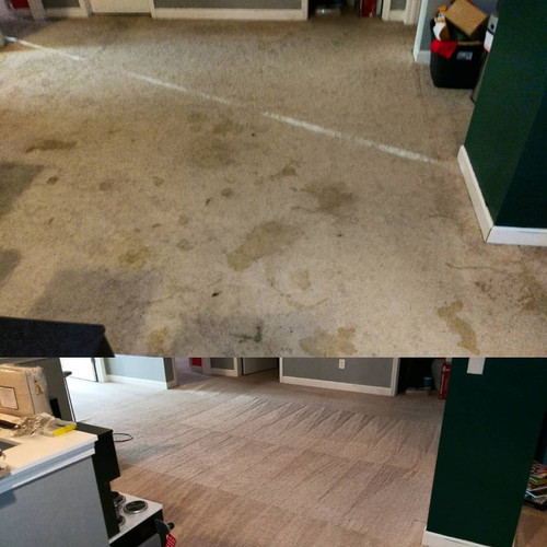 Pet Stain Galore