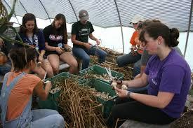 volunteers at farms.jpg