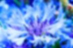 AdobeStock_305017884.jpeg