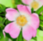 AdobeStock_42869605_edited_edited.jpg