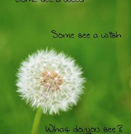 Optimism: Are Your Dandelions Weeds or Wishes?