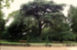 Family Piknik a lieu dans le parc du chateau de Grammont