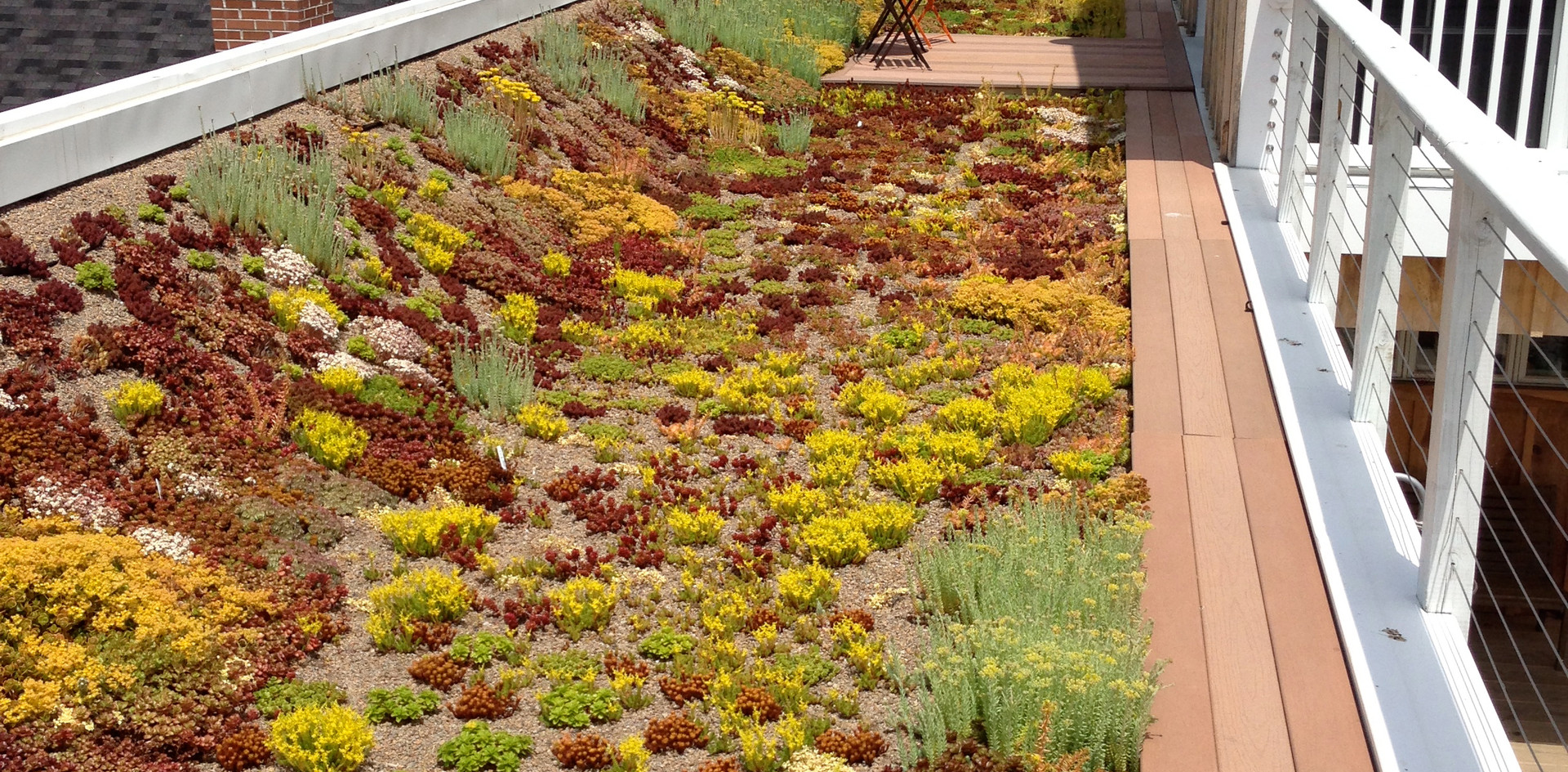 Green Roof at Mill Street