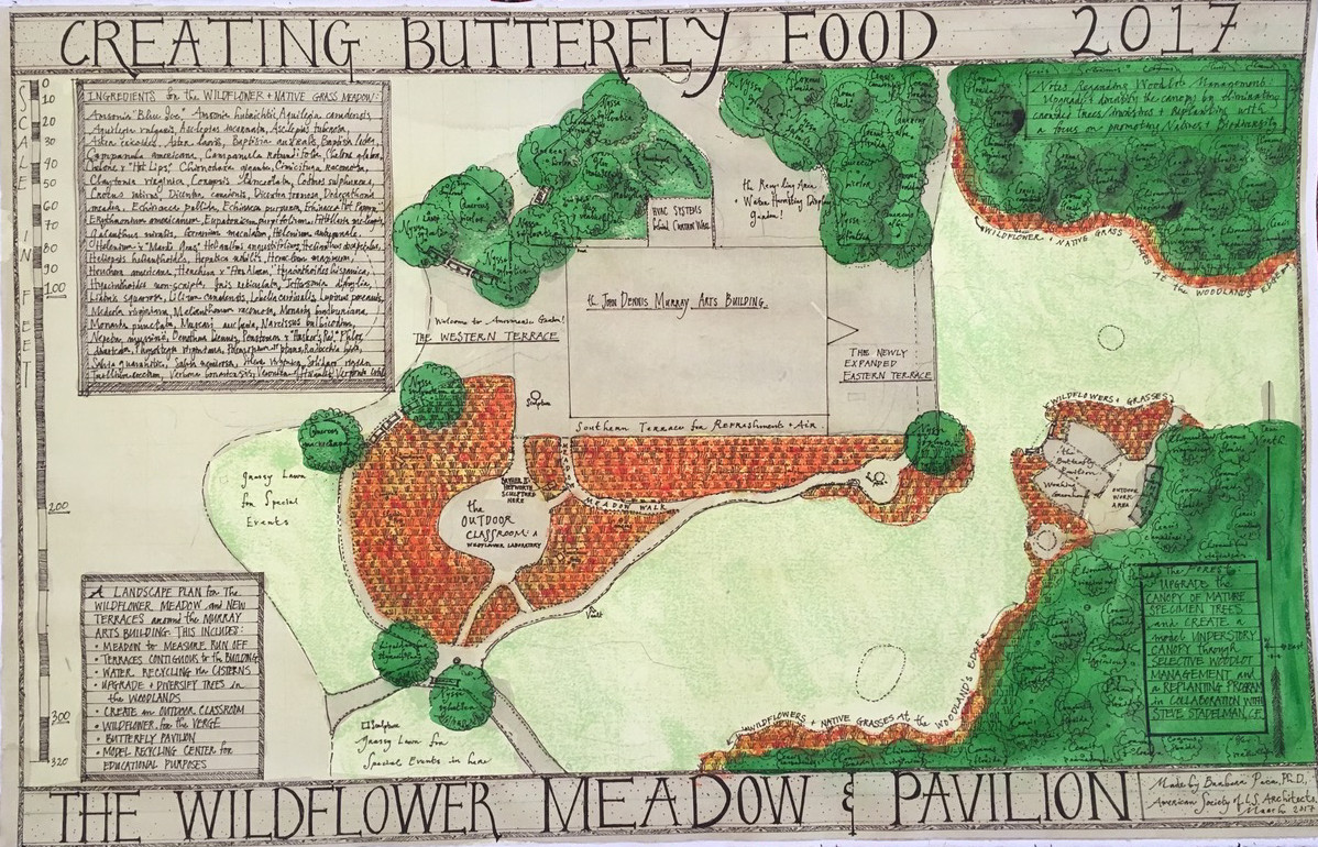The Wildflower Meadow & Pavilion: Creating Butterfly Food