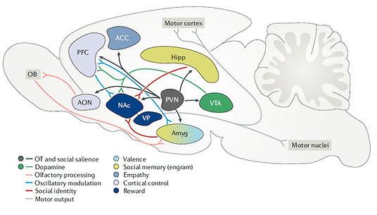 Neural circuitry image.jpg