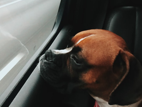 All About Dog Transport