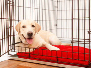 Crate Training: An Introduction