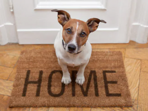 How To Prepare For Bringing Your Puppy Home