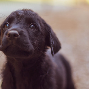What is a 'Registered Breeder'?