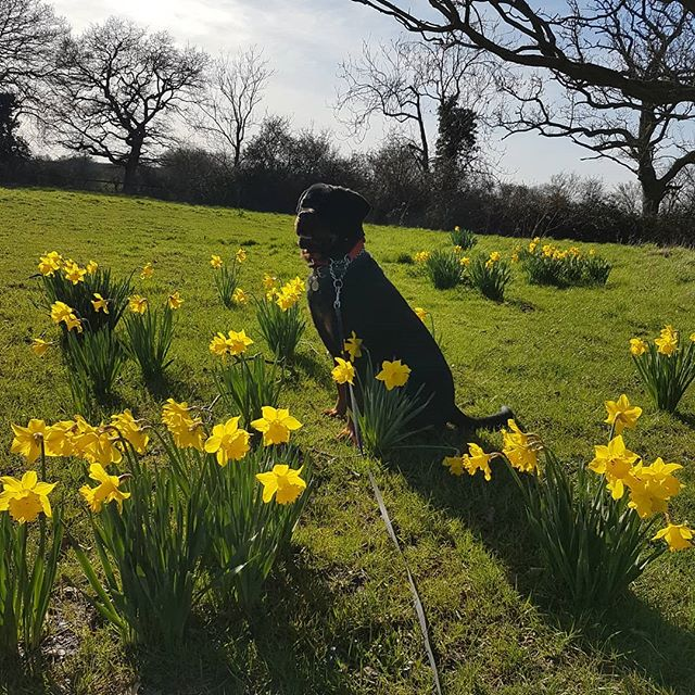 Spring is here _#boardingkennelessex #boardingkennels _#essex #maldon_#spring #petsitting #danburyes