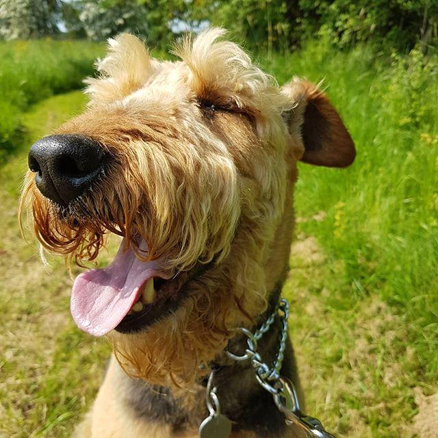 Very happy dog_#happydogs #happydog #boa