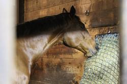 safety hay net
