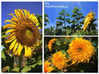 Reuse Those Sunflowers