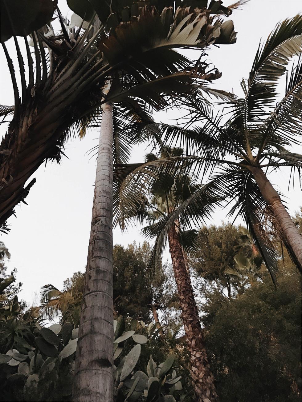 LA Palms_Carris Bennett Christianson
