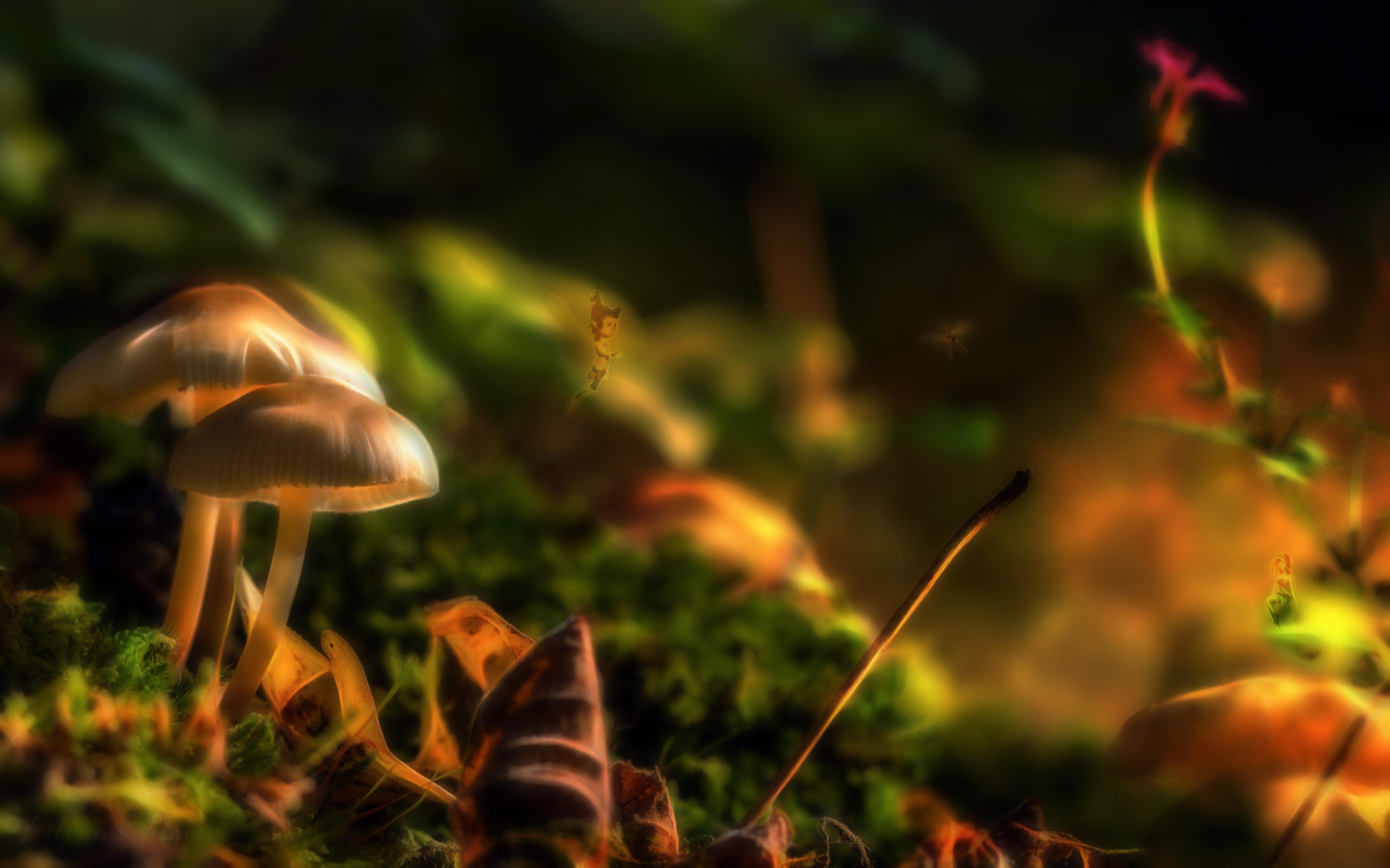 L'automne du petit monde merveilleux