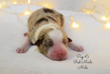 pup5-birth.jpg