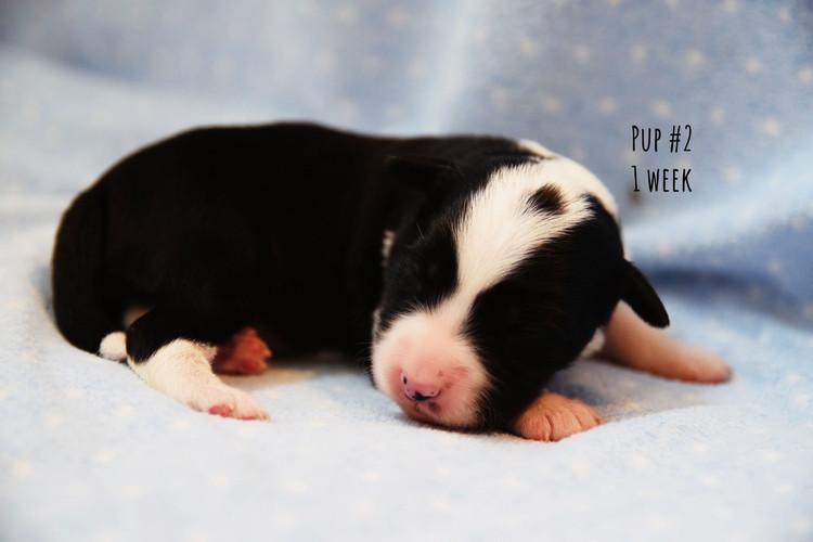 rs1-pup2-1wk.jpg