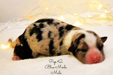 pup2-birth.jpg