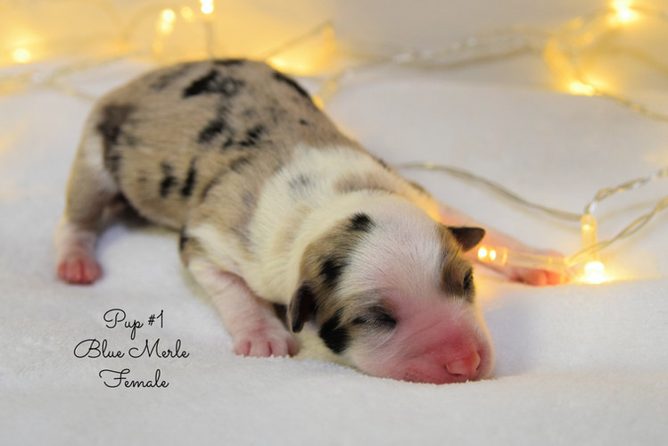 pup1-birth.jpg