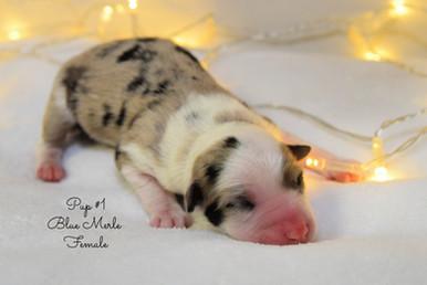 pup1-birth.jpg