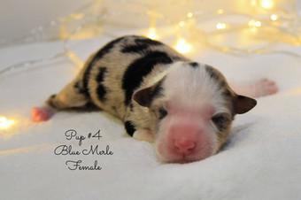 pup4-birth.jpg