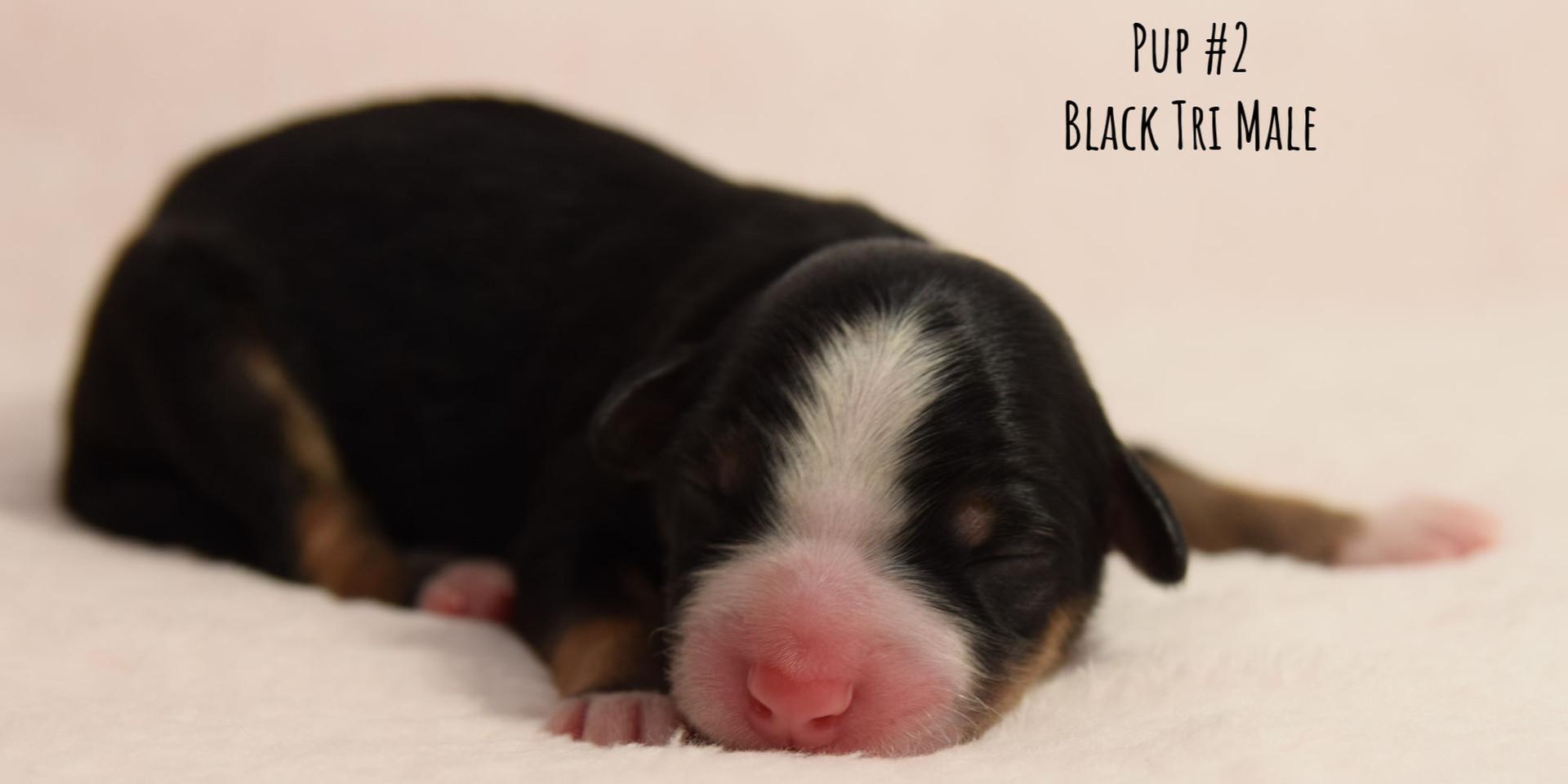 td1-pup2-birth.jpg